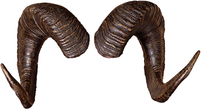 Horns Hornsveld Psychologenpraktijk